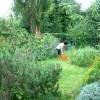clinic-herb-garden-1